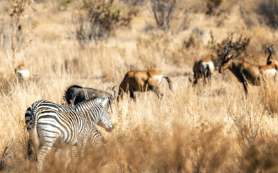 The Importance of Africa's Game Reserves