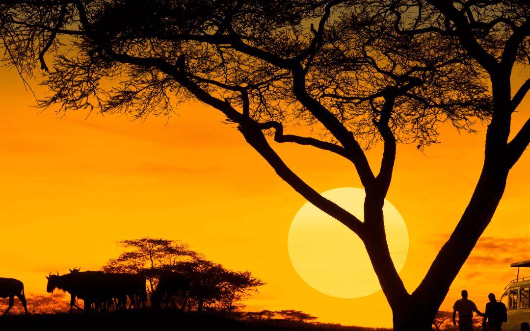 Surviving a Safari